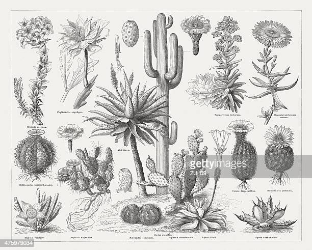 Cactuses, wood engravings, published in 1876