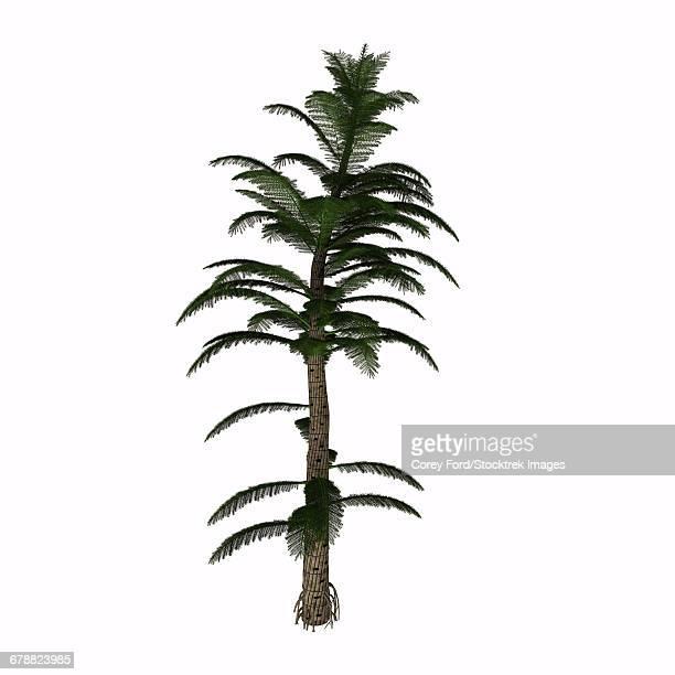 ilustraciones, imágenes clip art, dibujos animados e iconos de stock de calamite plant of the carboniverous period on white background. - animal extinto