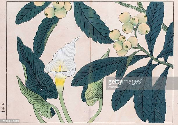 calla lilly and loquat tree japanese woodblock print - calla lily stock illustrations, clip art, cartoons, & icons