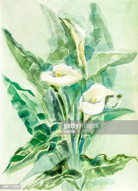 calla lily flowers - watercolor - calla lily stock illustrations, clip art, cartoons, & icons