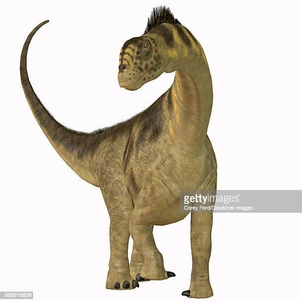 ilustraciones, imágenes clip art, dibujos animados e iconos de stock de camarasaurus was a sauropod herbivore dinosaur that lived during the jurassic era of north america. - paleozoología