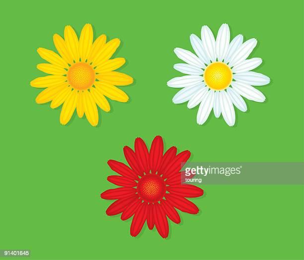 ilustraciones, imágenes clip art, dibujos animados e iconos de stock de camomile - planta de manzanilla