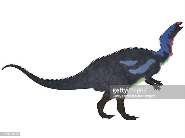Camptosaurus, a herbivorous dinosaur from the Late Jurassic Period.