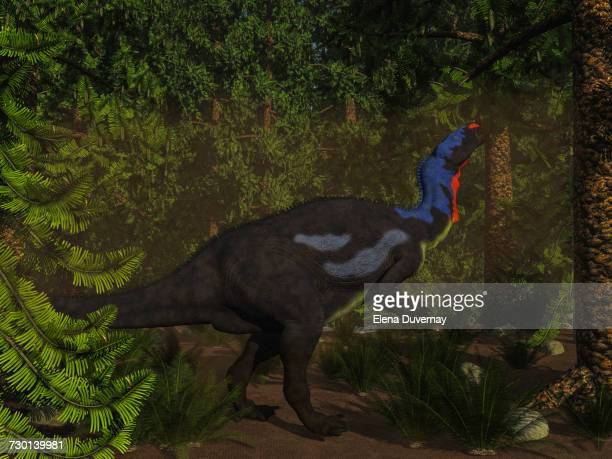 Camptosaurus dinosaur eating in a Wollemia pine forest.