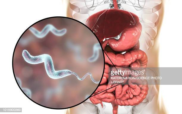 campylobacteriosis, conceptual illustration - diarrhea stock illustrations