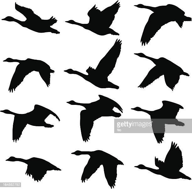 canadian geese silhouettes - flying stock illustrations