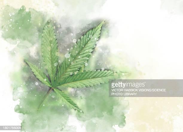cannabis leaf, illustration - 合法化点のイラスト素材/クリップアート素材/マンガ素材/アイコン素材