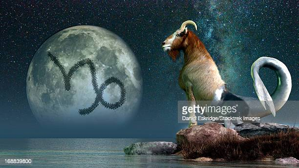 capricorn is the tenth astrological sign of the zodiac. its symbol is the sea goat. - patience stock illustrations