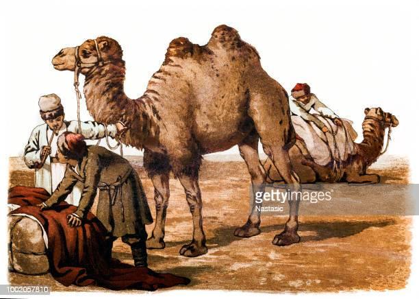 Caravana de comerciantes con camello