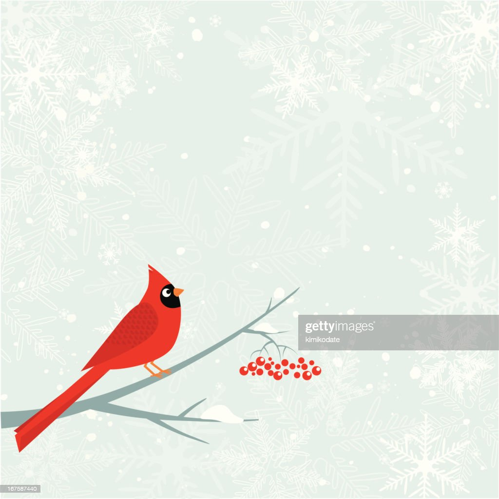 Cardinal bird. Winter