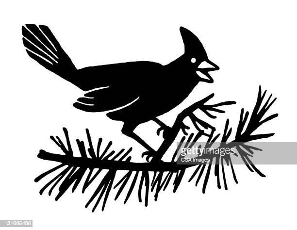 cardinal sitting on branch - branch stock illustrations