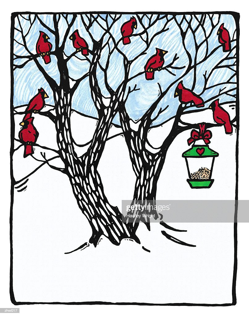 Cardinals & Bird Feeder : Stockillustraties