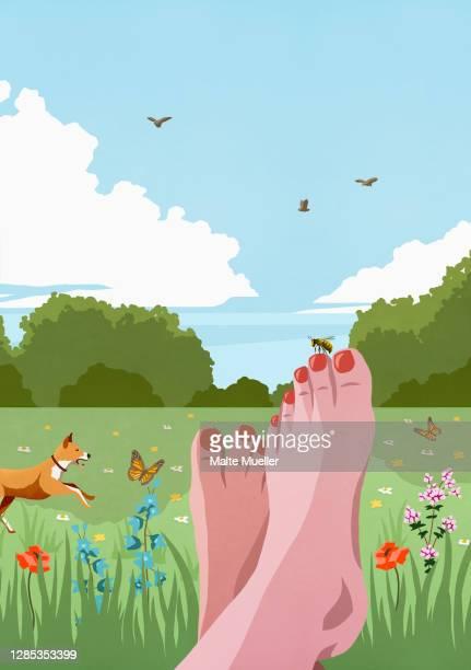 pov carefree barefoot woman relaxing in sunny, idyllic spring meadow - idylle stock-grafiken, -clipart, -cartoons und -symbole