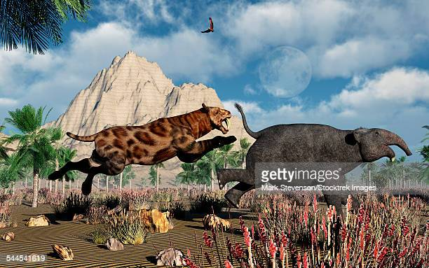 A carnivorous Sabre-Tooth Tiger attacking a young Deinotherium during Earths Pleistocene epoch.