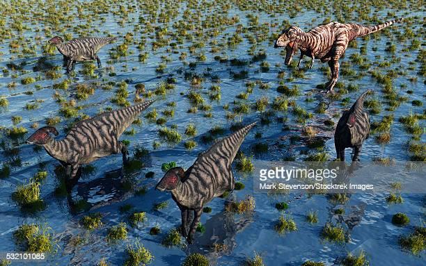 a carnivorous tyrannosaurus rex chasing a herd of parasaurolophus dinosaurs. - hadrosaurid stock illustrations, clip art, cartoons, & icons