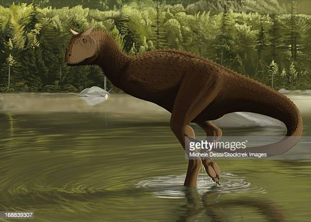 Carnotaurus searching for food in a prehistoric lake.