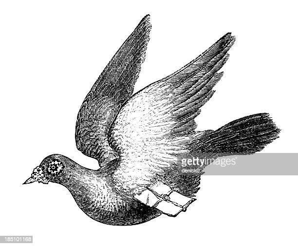 illustrations, cliparts, dessins animés et icônes de carrier pigeon - colombe