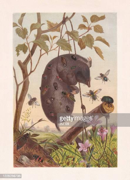 ilustraciones, imágenes clip art, dibujos animados e iconos de stock de insectos de carrión en un lunar muerto, cromolitógrafo, publicado en 1884 - biodiversidad