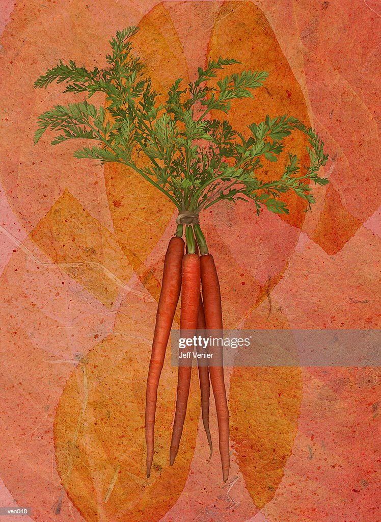Carrots on Leaf Background : stock illustration