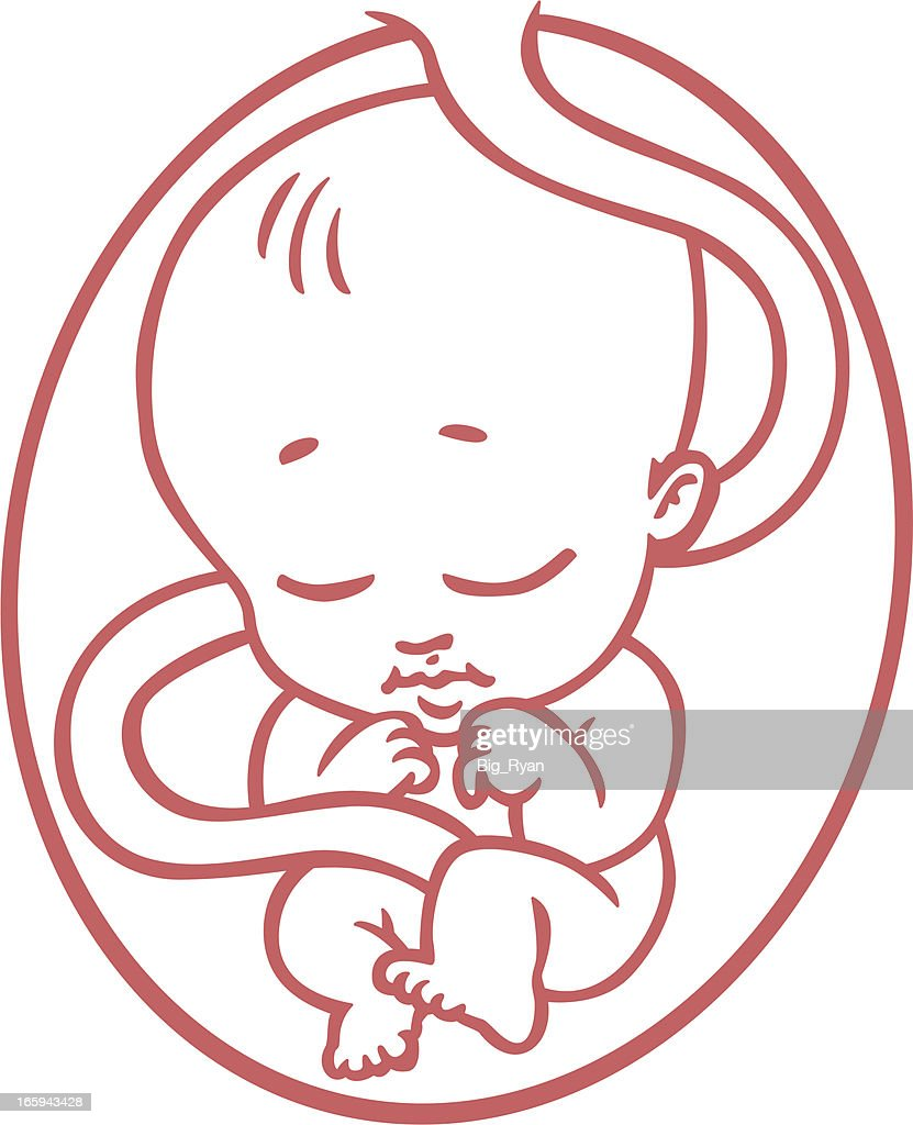 cartoon fetus vector art getty images
