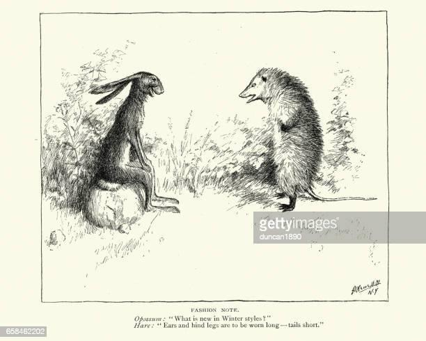 illustrazioni stock, clip art, cartoni animati e icone di tendenza di cartoon: the opossum and the hare - opossum