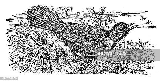 catbird - mockingbird stock illustrations, clip art, cartoons, & icons