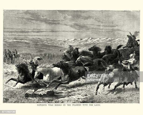 catching wild horses on the prairies with the lasso - mustang wild horse stock illustrations, clip art, cartoons, & icons
