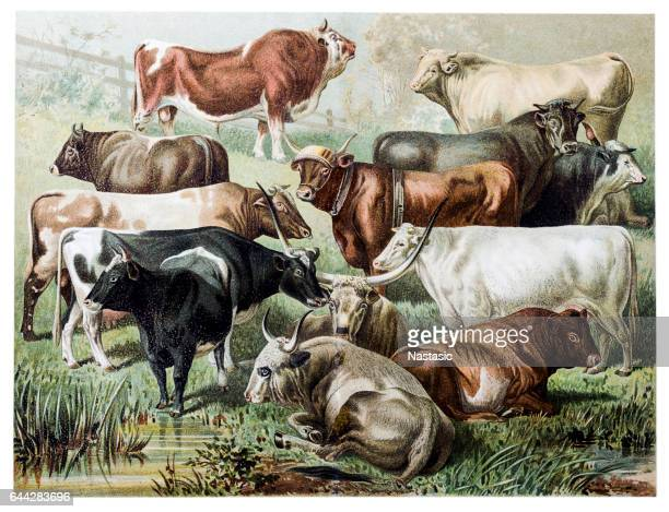 cattle - ranch stock illustrations