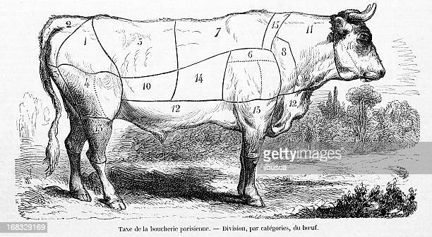 cattle meat beef sections - meat stock illustrations