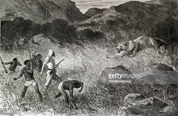 Caucasian hunter hunts lioness in Africa
