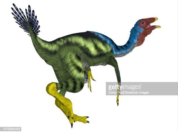 Caudipteryx dinosaur, white background.