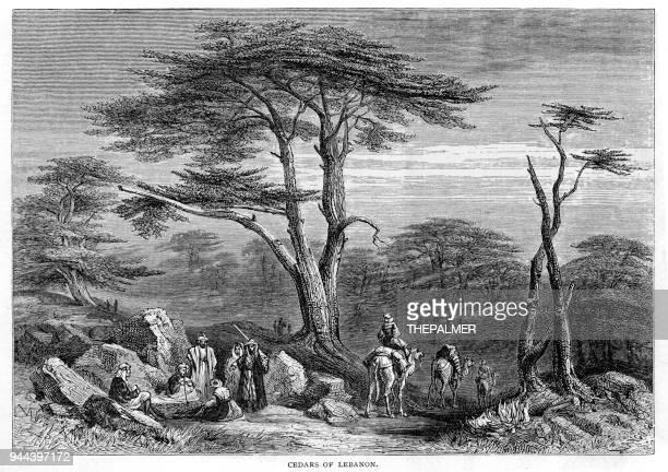 cedars of lebanon engraving 1881 - cedar tree stock illustrations, clip art, cartoons, & icons