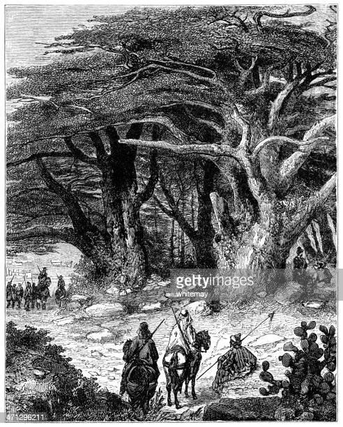 cedars of the lebanon - cedar tree stock illustrations, clip art, cartoons, & icons