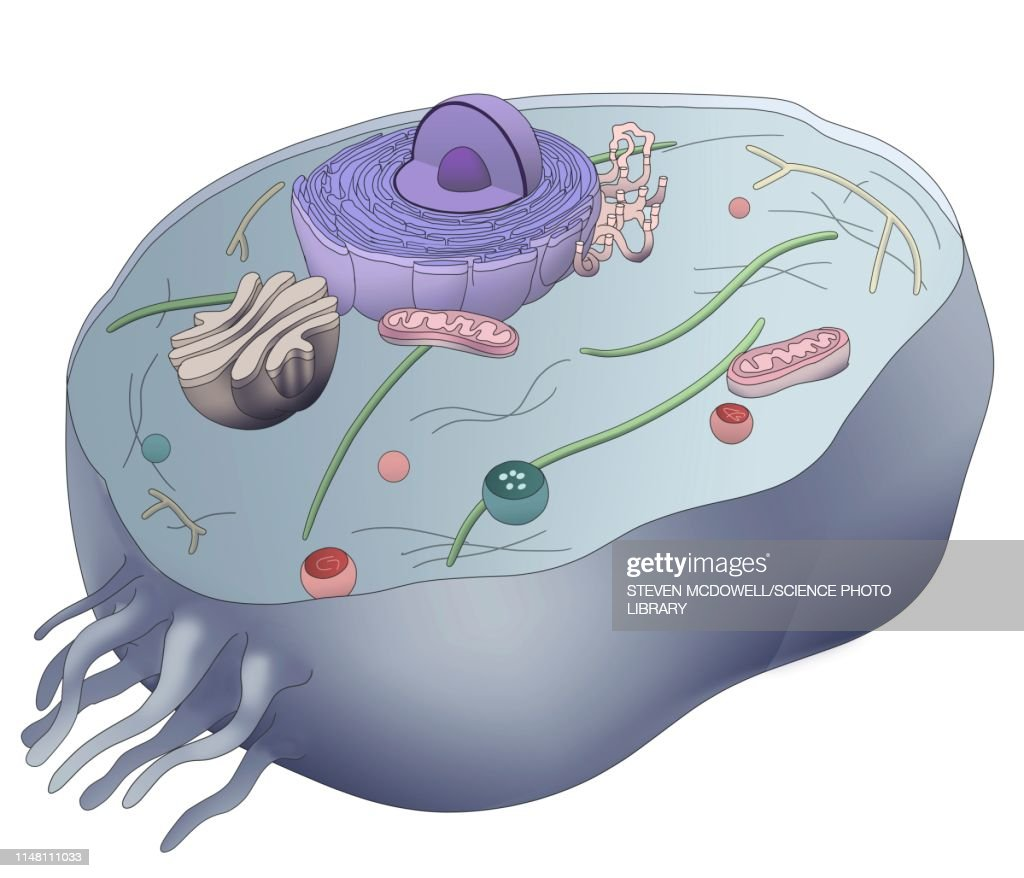 Cell Structure Illustration stock illustration - Getty Images