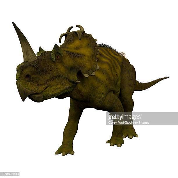 Centrosaurus dinosaur, front view.