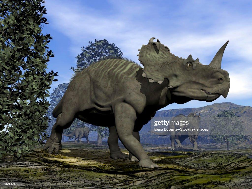 Centrosaurus dinosaurs walking amongst magnolia trees. : stock illustration