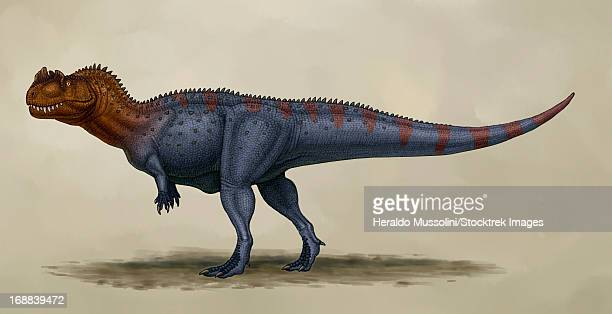 Ceratosaurus dentisulcatus, a theropod from the Jurassic period.