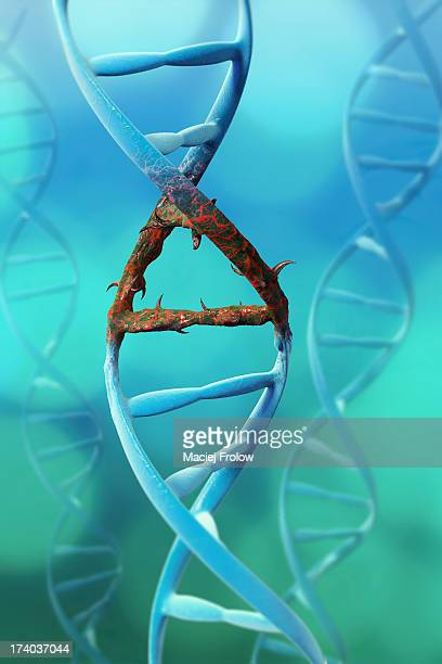 dna chain with mutated fragment - genetic mutation stock illustrations