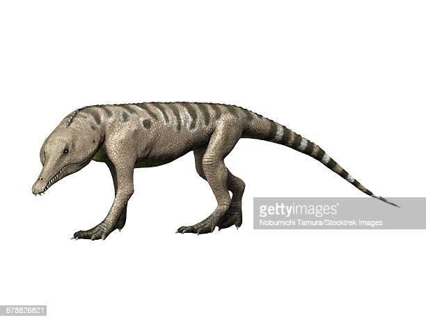 ilustraciones, imágenes clip art, dibujos animados e iconos de stock de chanaresuchus is an archosaur of the triassic period. - triásico