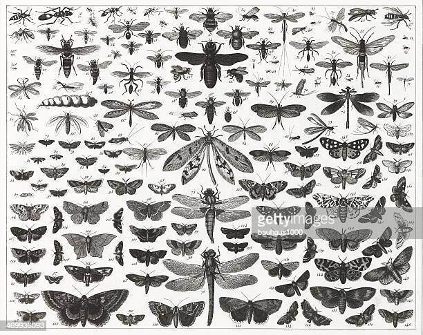 chart showing various types and sizes of flying insects - bumblebee stock illustrations, clip art, cartoons, & icons