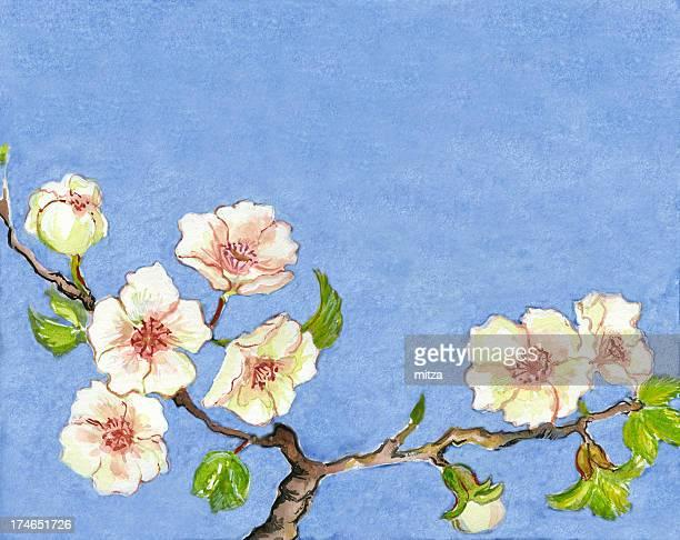 ilustraciones, imágenes clip art, dibujos animados e iconos de stock de pintura cherry blossom - cherry tree