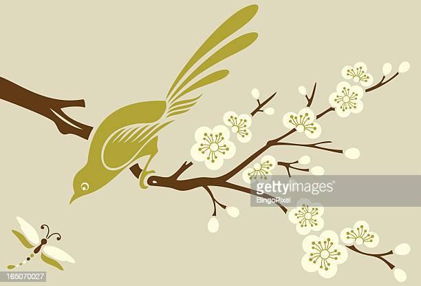 illustrations, cliparts, dessins animés et icônes de arbre bird cherry blossom & libellule - fleur de cerisier