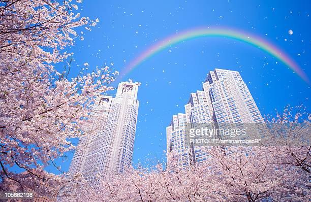 Cherry blossoms and skyscraper