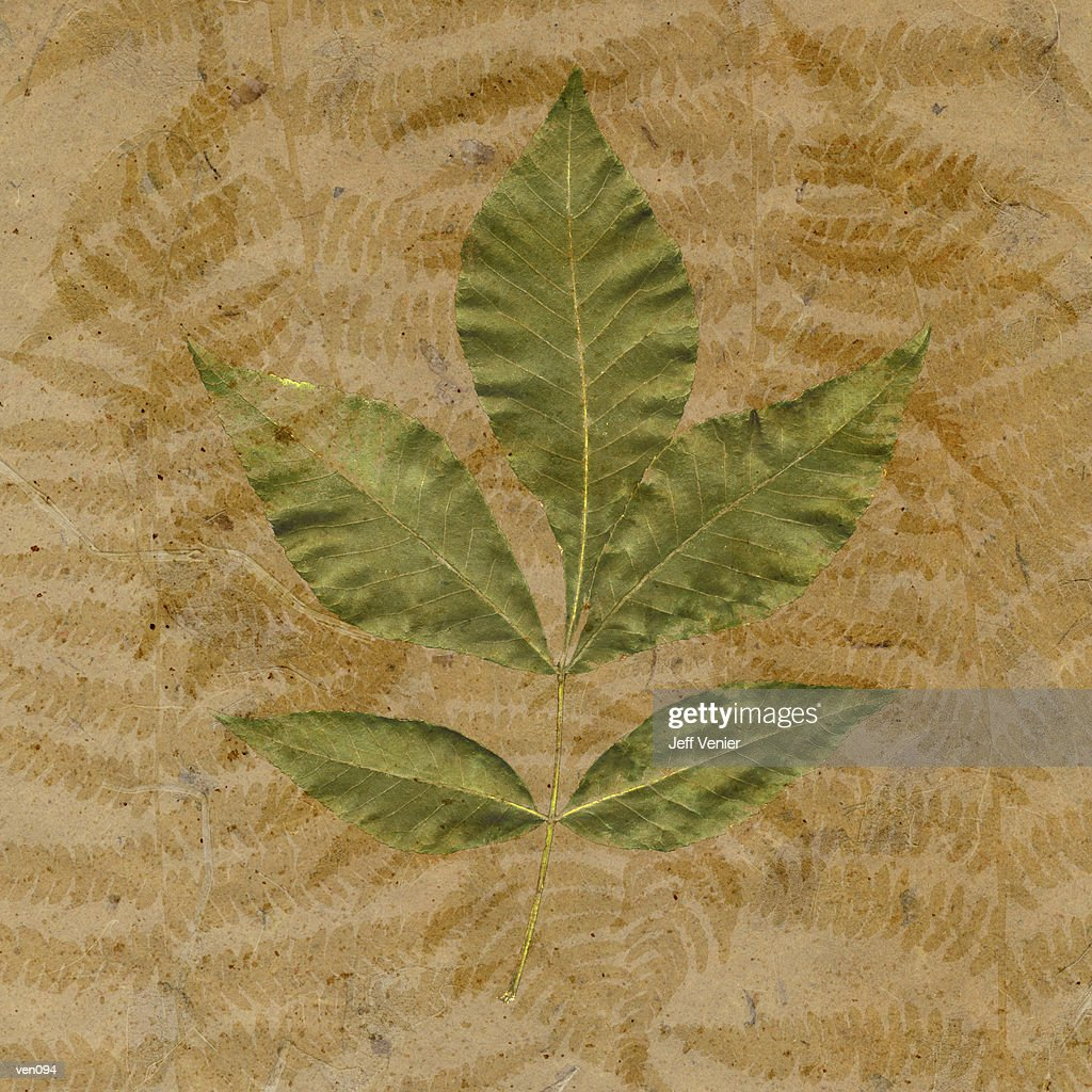 Chestnut Leaves on Fern Background : Stockillustraties