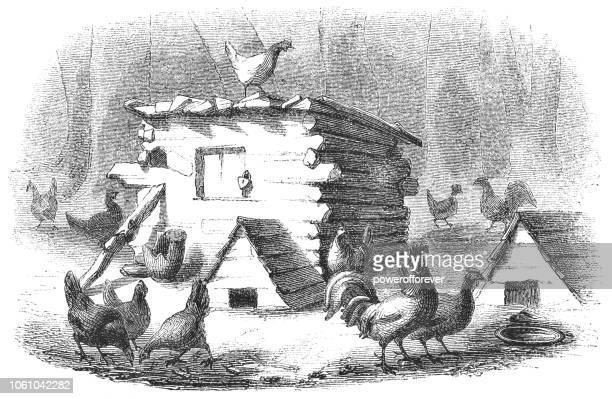 Chicken Coop in Virginia, USA (19th Century)