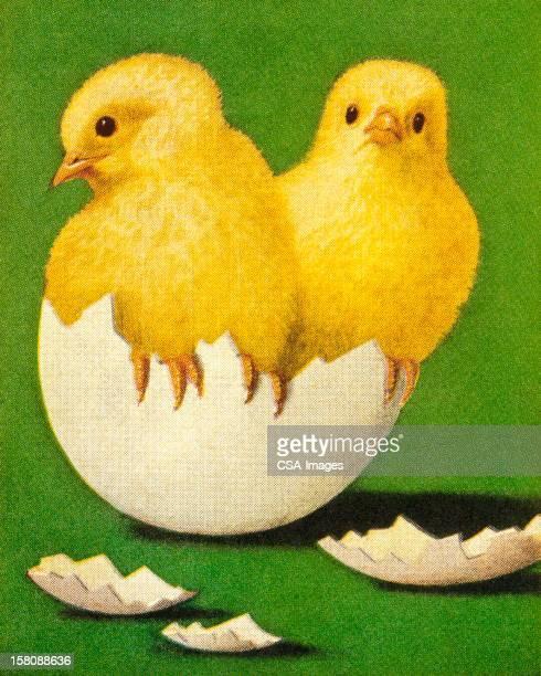 新しい「Chicks 」のシェル