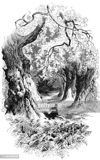 Child Looking Down a Path on the Woods - Works of Henry Wadsworth Longfellow