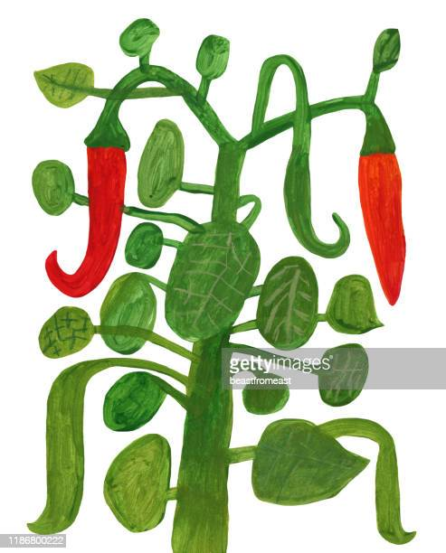 chilli pepper plant - mixed media stock illustrations