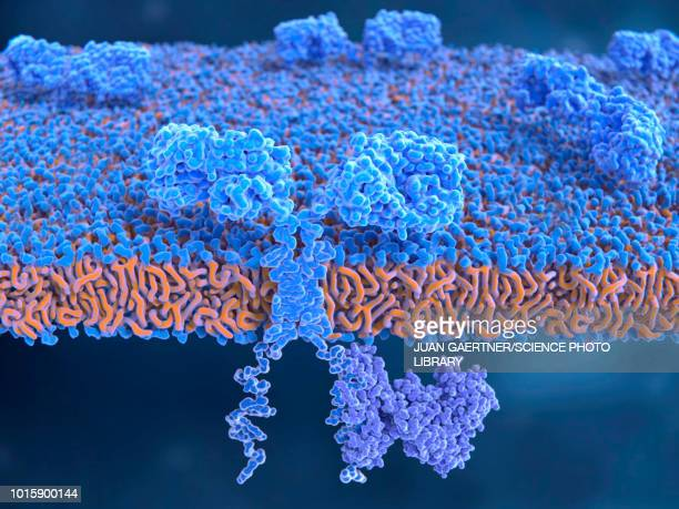 chimeric antigen receptor on t-cell, illustration - tumor stock illustrations