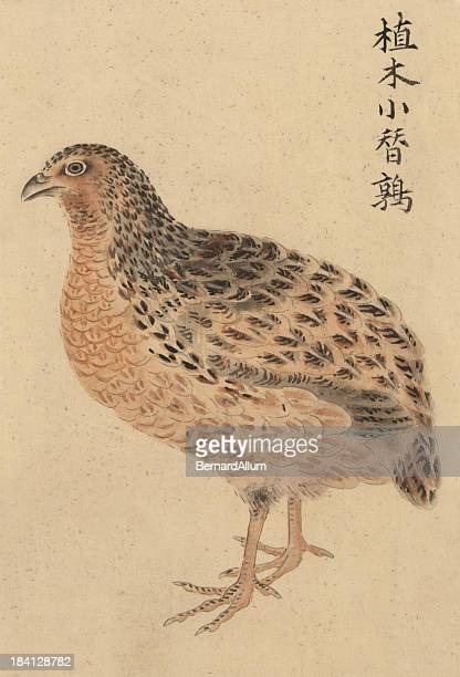 chinese small garden tree quail - quail bird stock illustrations, clip art, cartoons, & icons
